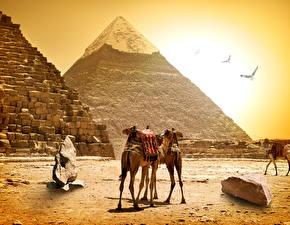 Bilder Ägypten Kamele Steine Pyramide bauwerk Cairo Natur