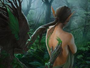 Pictures Elves Supernatural beings Men Trees Human back Fantasy