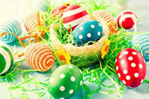 Bilder Feiertage Ostern Eier Nest Design