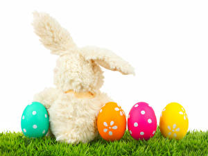 Picture Holidays Easter Rabbits Eggs Grass