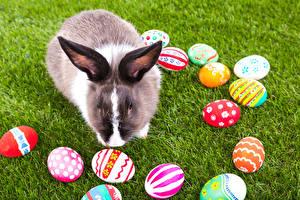 Обои Праздники Пасха Кролики Яйцо Трава животное
