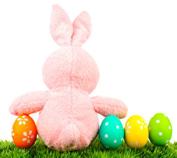 Pictures Holidays Easter Rabbits White background Egg Grass