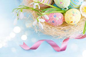 Fotos Feiertage Ostern Schneeglöckchen Eier Nest Band