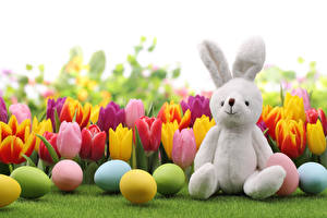 Обои Праздники Пасха Тюльпаны Кролики Яйцо Трава цветок