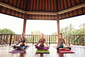 Fonds d'écran Position du lotus Trois 3 S'asseyant Main Yoga Filles Sport