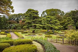 壁纸、、東京都、日本、庭園、芝、低木、木、塀、Imperial Palace East Gardens、自然