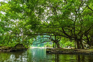 Pictures Vietnam Lake Trees Stairs Branches Nature
