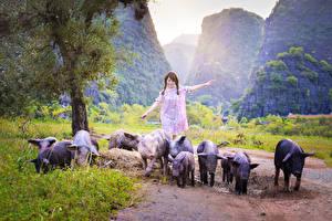Wallpaper Asiatic Domestic pig Stroll Girls