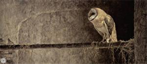 Hintergrundbilder Vögel Gezeichnet Eulen Ast Tiere