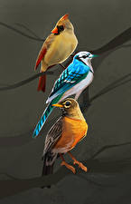 Bilder Vögel Gezeichnet Drei 3 Ast Tiere