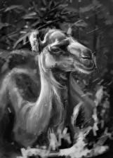 Fotos Kamele Gezeichnet Schwarz weiß Kopf