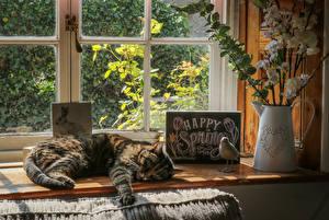 Hintergrundbilder Katze Schlafende Fenster Krüge Ast Englisches ein Tier