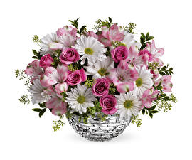 Pictures Chrysanthemums Roses Alstroemeria White background Vase Flowers