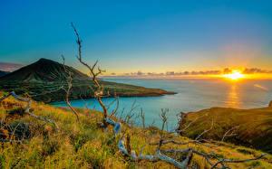 Fotos Küste Sonnenaufgänge und Sonnenuntergänge Ozean Vereinigte Staaten Hawaii Gras Ast Natur