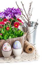 Hintergrundbilder Krokusse Gänseblümchen Feiertage Ostern Weißer hintergrund Ast Eimer Blumen