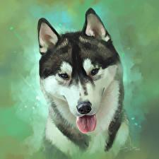 Hintergrundbilder Siberian Husky
