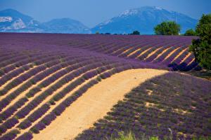 Hintergrundbilder Frankreich Acker Lavendel Provence Natur