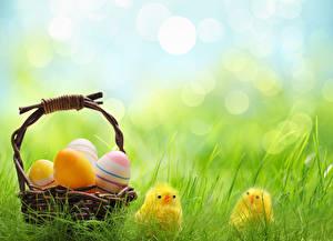 Bilder Feiertage Ostern Hühner Eier Weidenkorb Gras