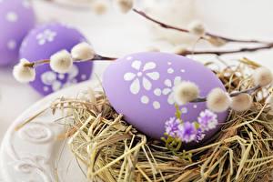 Bilder Feiertage Ostern Großansicht Ei Nest Ast
