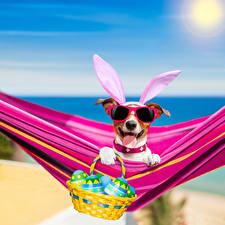 Wallpaper Holidays Easter Dog Eggs Wicker basket Jack Russell terrier Hammock Eyeglasses Tongue Funny Rabbit ears animal