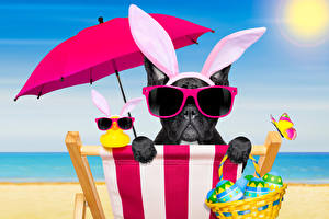 Pictures Holidays Easter Dogs French Bulldog Eggs Umbrella Glasses Rabbit ears Funny Sunlounger animal