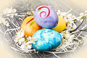 Hintergrundbilder Feiertage Ostern Ei Ast