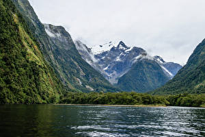 Images New Zealand Mountain Forest Bay Harrison Cove Milford Nature