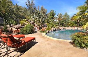 Bilder Resort Schwimmbecken Palmengewächse Sonnenliege Strauch Natur