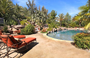 Photo Resorts Swimming bath Palm trees Sunlounger Bush Nature