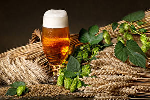 Hintergrundbilder Bier Echter Hopfen Weizen Weinglas Ähre Schaum Blatt Lebensmittel