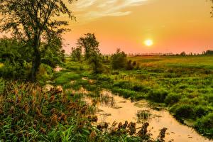 Bilder Kanada Sonnenaufgänge und Sonnenuntergänge Quebec Sumpf Gras Sonne