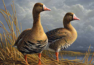 Picture Geese Painting Art Birds Two James Hautman Animals