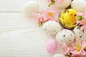 Hintergrundbilder Feiertage Ostern Hühner Bretter Ei Nest