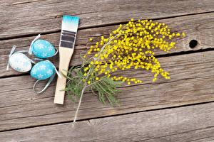 Bilder Feiertage Ostern Mimosen Bretter Ei Ast Pinsel