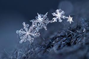 Hintergrundbilder Makrofotografie Schneeflocken