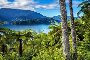 Images New Zealand Mountains Lake Trunk tree Elaine Bay Marlborough Nature