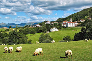 Pictures Spain Building Grasslands Sheep Clouds Zugarramurdi Navarre Nature