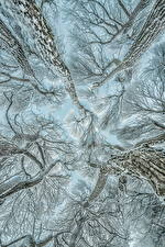 Picture Winter Trees Branches Snow Bottom view Nature