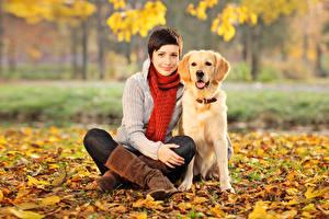 壁纸,,秋季,犬,寻回犬,棕色的女人,坐,圍巾,葉,凝视,女孩,