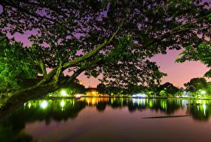 Hintergrundbilder Bangkok Park See Nacht Ast Bäume Natur