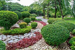 Sfondi desktop Bangkok Thailandia Parchi Pietre Arbusti Rot Fai Park Natura