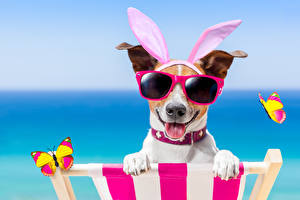 Images Dog Butterflies Jack Russell terrier Rabbit ears Glasses Tongue Funny Sunlounger animal