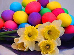 Fotos Feiertage Ostern Narzissen Großansicht Ei Blumen