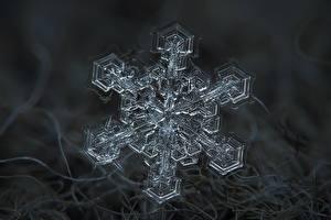 Hintergrundbilder Makro Hautnah Schneeflocken