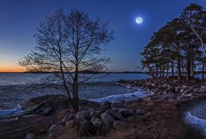 Fotos Schweden Küste Steine Abend Mond Bäume Natur