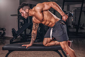 Photo Bodybuilding Man Physical exercise Dumbbells Hands Tattoos Muscle Sport