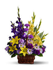 Papel de Parede Desktop Buquê Dianthus Gladioluses Lírio Fundo branco Cesta de vime Flores