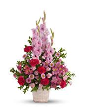 Papel de Parede Desktop Buquê Gladioluses Alstroemeria Dianthus Fundo branco flor