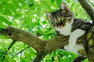 Fotos Katze Ast Blick Tiere