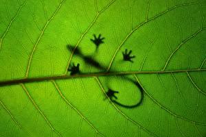 Bilder Nahaufnahme Echsen Blattwerk Silhouetten Natur Tiere